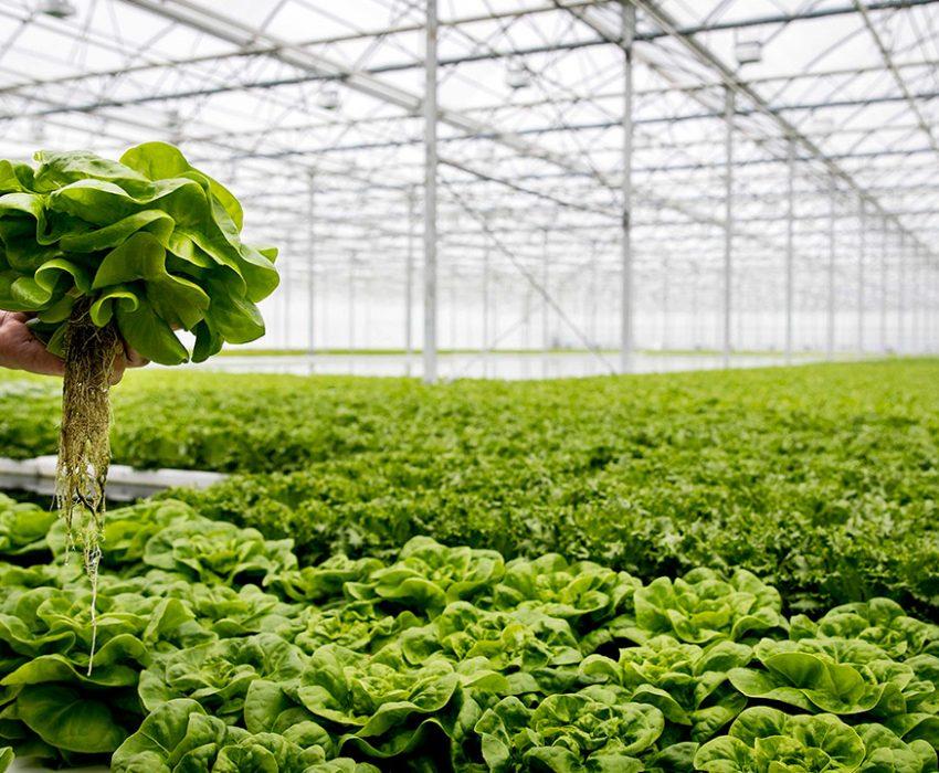Agricultura6